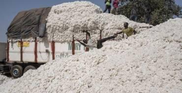 « Les étrangers viennent de plus en plus acheter nos terres à vil prix », entretien avec Nansomme Orou Soré, technicien agricole et gérant de l'Union communale des producteurs de Banikoara (UCP) au Bénin